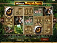 Untamed  bengal tiger1