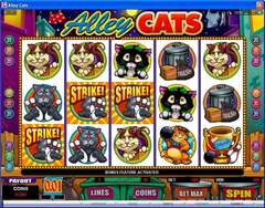 Alley 20cats 20scatter